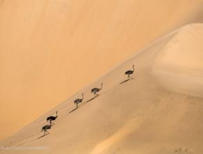 Namibie Faune